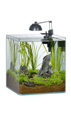 eheim shrimp 35