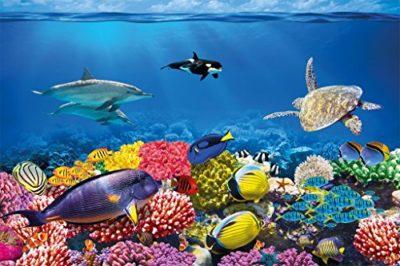 Compra de peces online en España