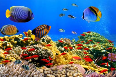 Venta de peces de acuario 12 tipos