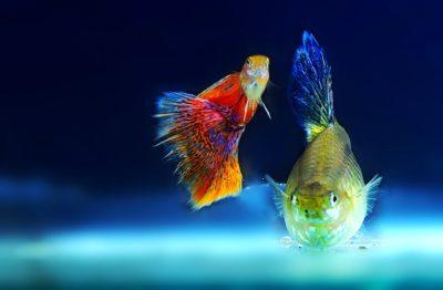 Compra de filtros para acuario económicos