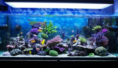 Iluminación LED para acuarios donde comprar