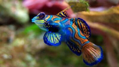 Las enfermedades más comunes de los peces