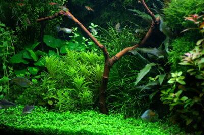 Las 4 plantas de acuario más vendidas y más valoradas