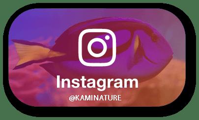 instagram-kaminature