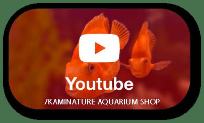 youtube - kaminature