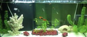 filtración en el acuario