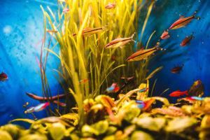 filtros según peces