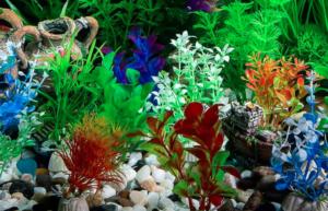 plantas de acuario de fácil mantenimiento