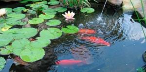 instalar plantas estanque
